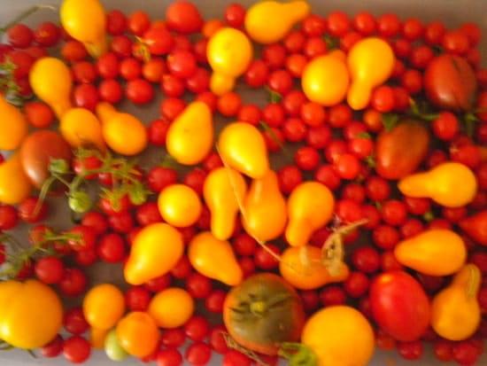 Le Bistrot de Pierrerue  - Les tomates anciennes! -