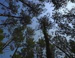 A la reconquête des forêts