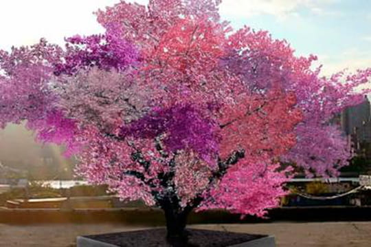 L'arbre incroyable aux 40espèces de fruits