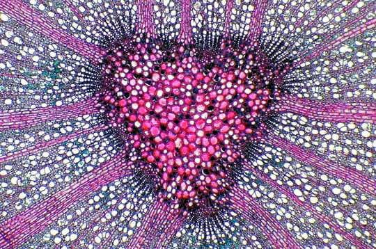 Un hêtre au garnd coeur