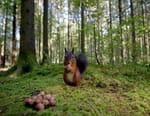 Le murmure de la forêt