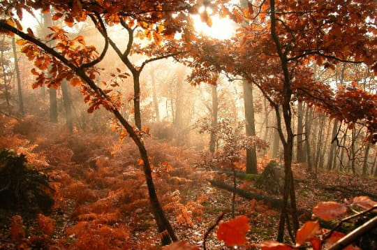 Forêt embrumée