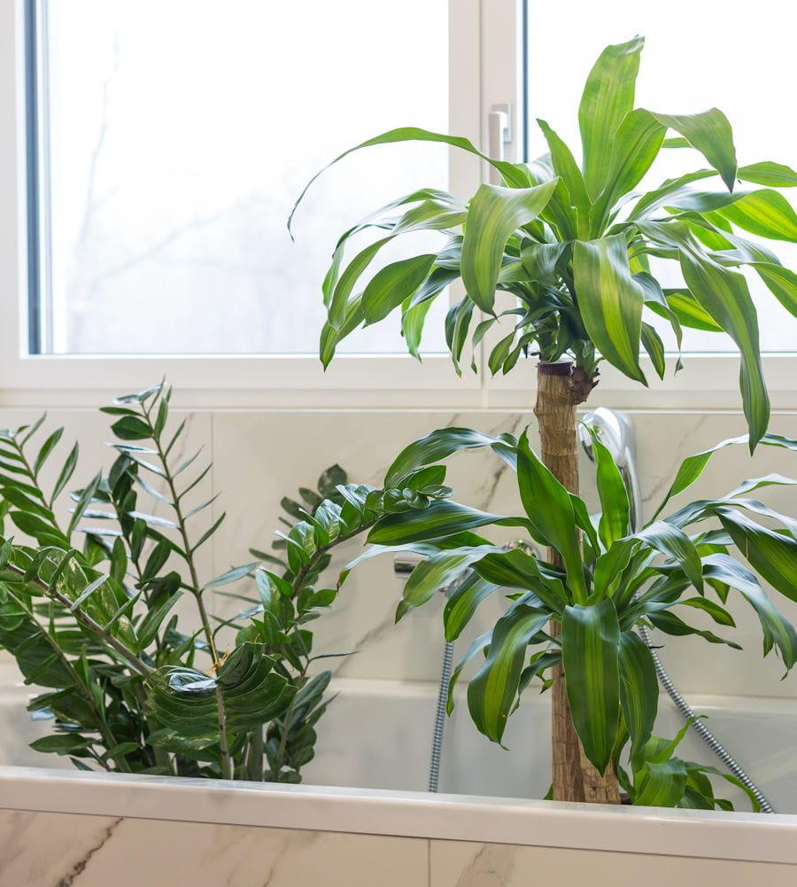 Comment Arroser Mes Plantes Pendant Les Vacances installer les plantes dans la baignoire