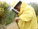 Miel de Sicile, le nectar des abeilles noires