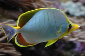 Les 20plus beaux aquariums de France