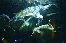 Dans les coulisses d'un grand aquarium