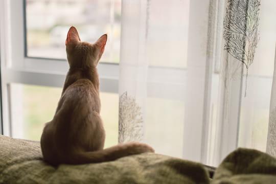 Chat brûlé vif à Nice : le tortionnaire regrette mais ira en prison