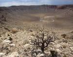 Planète Terre : aux origines de la vie