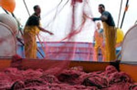 Marin pêcheur : un métier noble et dangereux