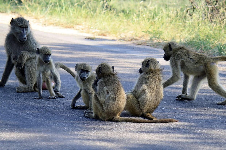 Des singes se sont échappés du zoo de Vincennes — Alerte WTF