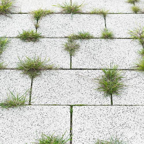 Pour d sherber son jardin - Comment desherber son jardin naturellement ...