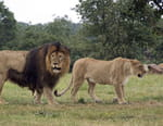 Homme vs animal