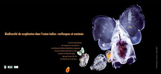 Un zooplancton extrêmement varié