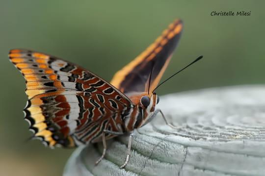 Vos meilleures images de septembre 2011