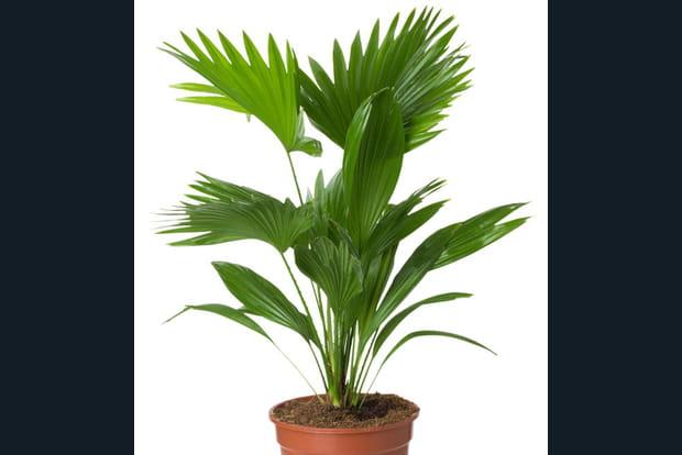 Plantes D Appartement Photos 20 astuces pour des plantes d'intérieur en pleine santé
