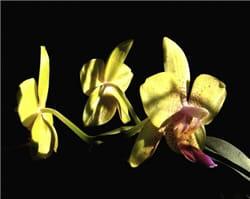 une lumière trop crue génère de forts contrastes : la fleur est presque cramée,