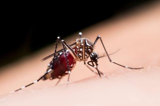 31 astuces et remèdes efficaces pour dire adieu aux moustiques