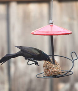 Donner de l 39 eau et manger aux oiseaux - Faire peur aux oiseaux jardin ...