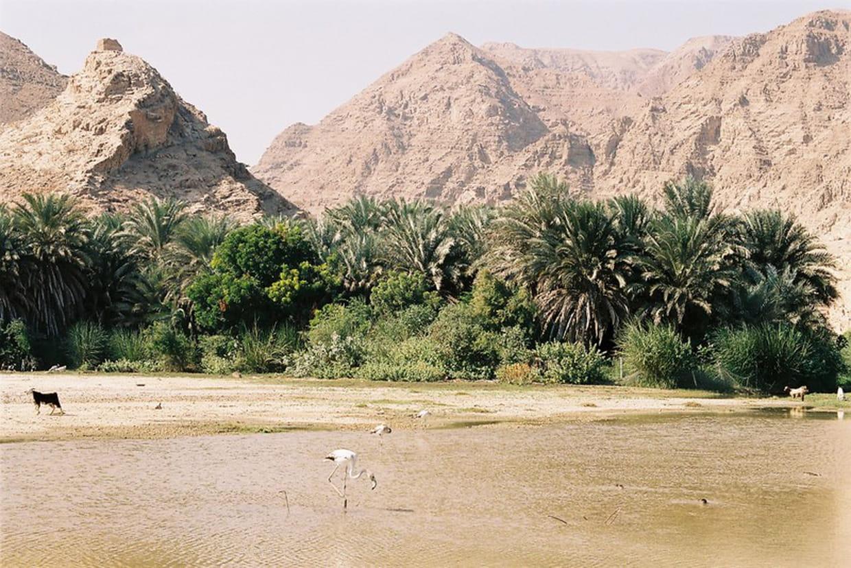 sites de rencontres en ligne à Omansites de rencontre sans paiement