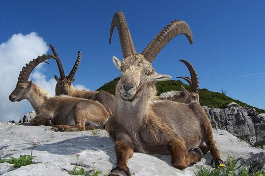 Les 100plus belles photos animalières de l'année