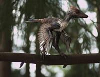 Les mondes perdus : Le mystère des dragons à plumes