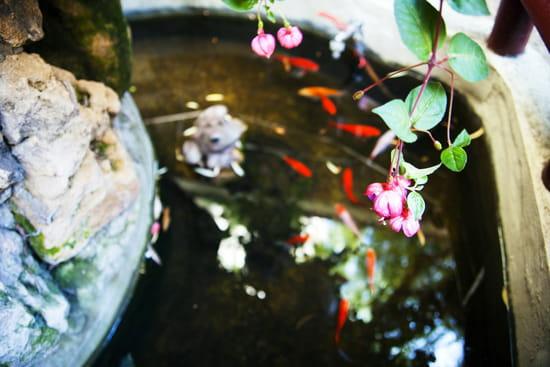 Jardin d'Asie