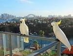 Des perroquets dans la ville