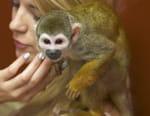 La clinique des animaux exotiques