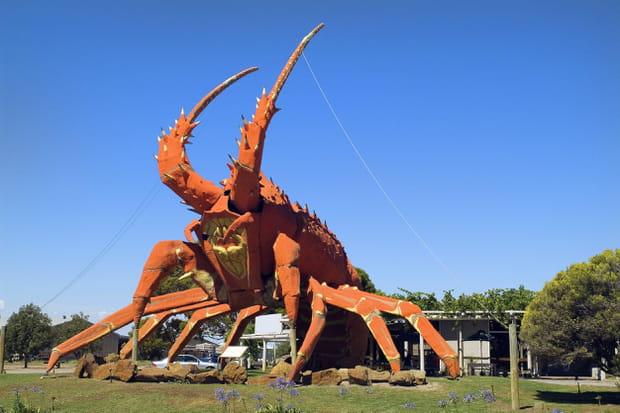 Le homard géant, en Australie