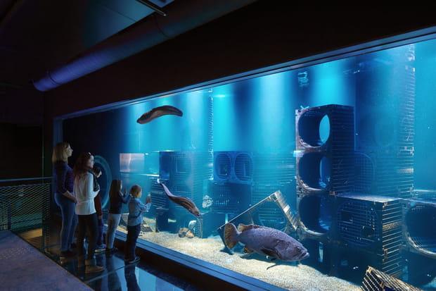 L'aquarium aux mérous