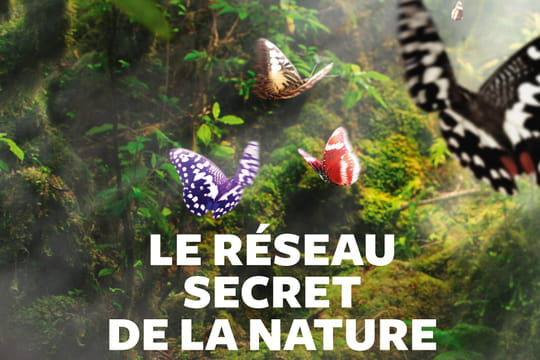 Les secrets insoupçonnables de la nature