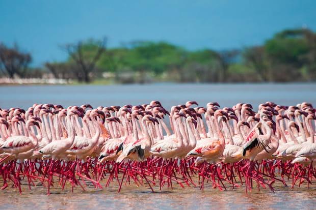 Le parc national du lac Nakuru au Kenya