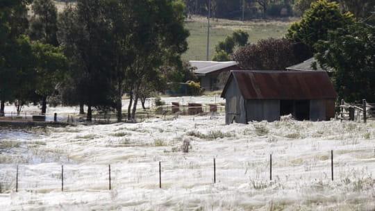 Une pluie d'araignées s'est abattue sur une ville du sud de l'Australie