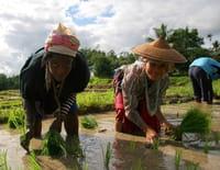 Ô bout de l'inconnu : En Thaïlande