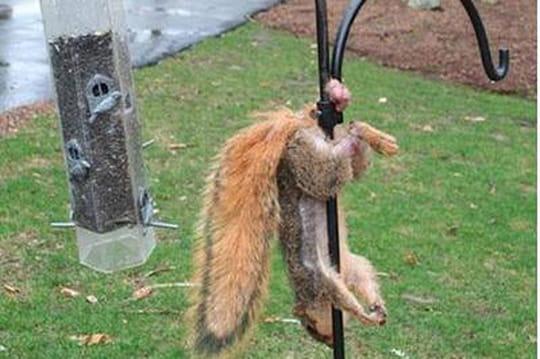 Caisse d'Epargne: l'écureuil testicules coincés, very bad buzz