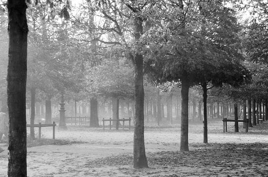 Brume sur les Tuileries