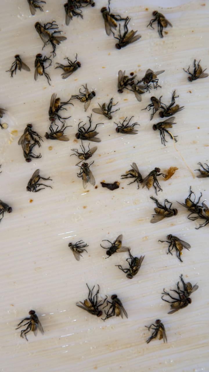 Probleme De Moucheron Dans La Cuisine du papier tue-mouches maison