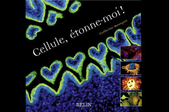 Des cellules étonnantes