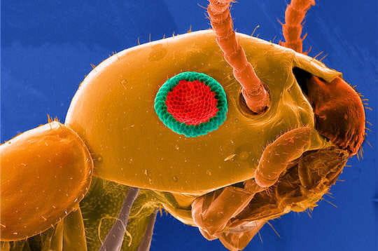 Un termite