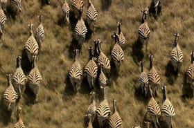 Les grandes migrations : bouger pour survivre