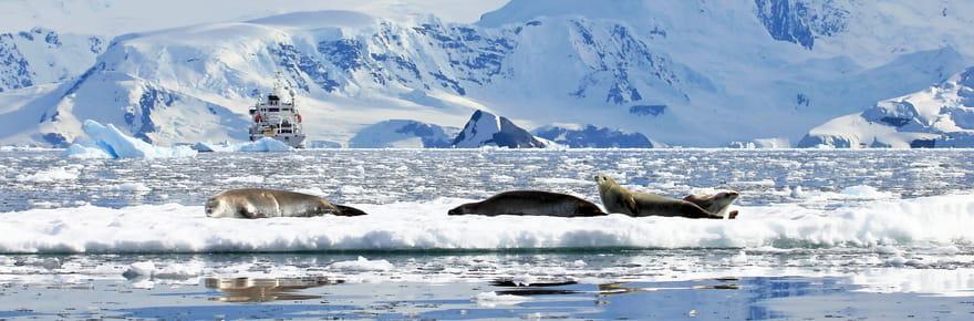 Des phoques envahissent un village au Canada [VIDEO]