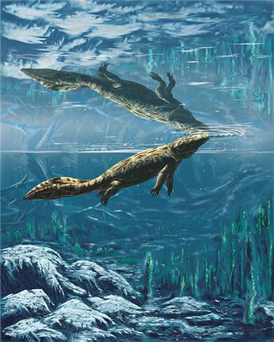 hynerpeton vivant il y a 360 millions d'années. on a retrouvé des restes dans le