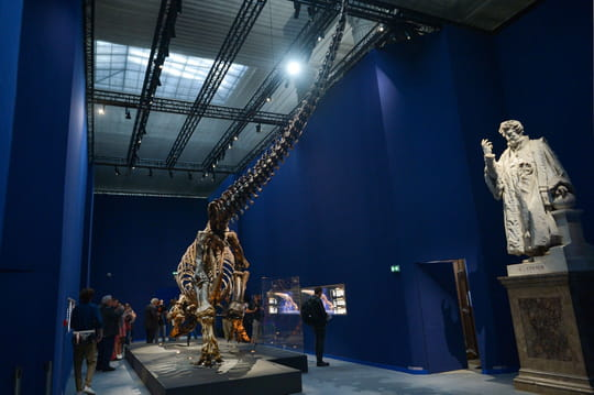 Musée d'histoire naturelle de Paris: galeries, horaires, tarifs, préparer votre visite