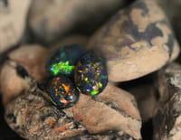 Chercheurs d'opale : Le tout pour le tout