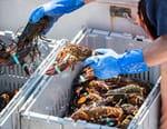 Homards : pêche à haut risque