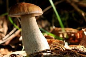 Les drôles de champignons de l'automne