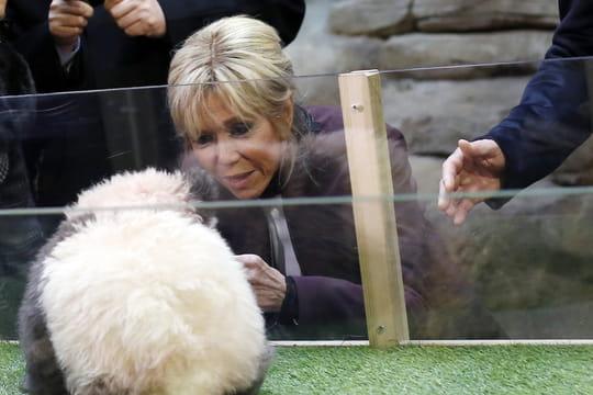 Brigitte Macron: rencontre animée avec Yuan Meng, le panda de Beauval