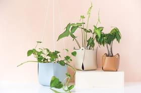 Des DIY déco à fabriquer avec des plantes