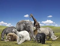 Les grands animaux d'Asie : Le dragon de Komodo