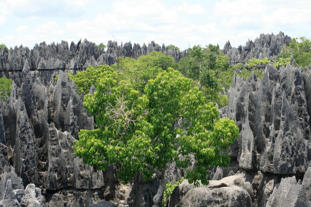 Tsingy, la forêt de pierres